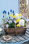 Hyacinthus 'White Pearl' (hyacinth), Viola cornuta Rocky 'Lavender Blush'