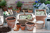 Sowing style pots with earth and sand, widger, pressure stamp