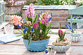 Hyacinthus 'Pink Pearl', 'Gypsy Queen', 'Jan Bos' and Muscari