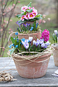 Self made terracotta pots - Crocus 'Striped Beauty' pot tower