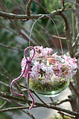 Preserving jar as a lantern with viburnum Bodnantense 'Dawn'