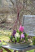 Flat zinc bowl planted with Hyacinthus orientalis