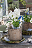 Hyacinthus 'White Pearl' (hyacinth) and muscari (grape hyacinth)