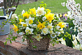 Yellow-white spring bouquet in the basket Narcissus, Helleborus