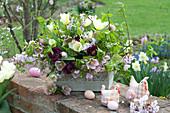Easter arrangement in metal box on garden wall, Tulipa