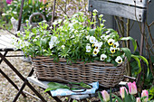 Basket with Galium odoratum, Allium ursinum