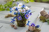 Small bouquet of anemone blanda (spring anemone), scilla
