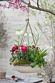 Enamel bowl planted with ranunculus as hanging planter