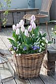 Tulipa 'Shirley', Viola cornuta and Anemone