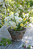 Small bouquet of Narcissus 'Bridal Crown', 'Sun Disc'