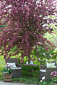 Cozy seat under Malus 'Profusion' (ornamental apple), baskets