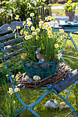 Basket with Narcissus 'Sun Disc' (Narcissus) in tendrils wreath