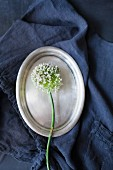 White allium flower on oval silver platter