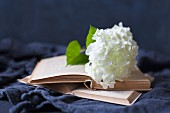 White hydrangea flower on open book