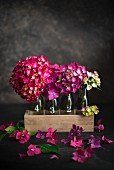 Pink hydrangea flowers in glass bottles