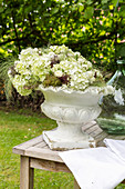 White hydrangeas in antique urn on wooden table in garden