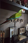 Stuffed parrot amongst collection of curiosities on shelves
