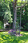 Old wooden ladder leaning against tree in idyllic garden