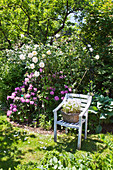 Basket planted with flowering plants on chair in summer garden