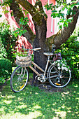 Old bicycle with flowers in basket leaning against tree