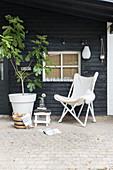 Feigenbäumchen, Hocker und Butterfly Stuhl auf überdachter Veranda