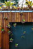 Hanging shoots of a plant on a wooden wall