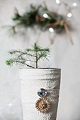 Tiny fir tree in vase wrapped in cloth