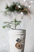 Kleines Nadelbäumchen in einer mit Stoff umwickelten Vase