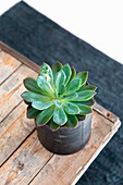 Succulent in cache pot on wooden table