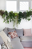 Grey corner sofa with scatter cushions below plants on windowsill