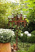 Iron candelabra used as trellis