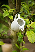 Old teapot hung from tree branch