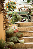 Steps in old nursery decorated with potted herbs and standard plants and bird ornament