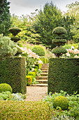 Opening in clipped hedge leading to steps between flowerbeds and hydrangeas