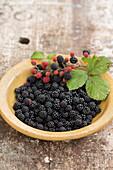 Bowl of freshly picked blackberries and blackberry sprig