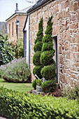 Spiral hedges at the entrance of a natural stone house