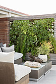 Elegant outdoor furniture and green wall on terrace
