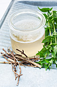 Home-made soapwort (Saponaria officinalis) washing solution in old mason jar