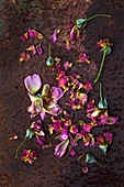 Verblühte Rosen mit einzelnen Blütenblättern auf rostigem Untergrund