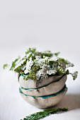 Yarrow in stack of bowls with ruffled rims