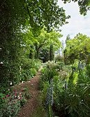 Flowers lining garden path leading to cypress