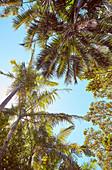 Blick von unten auf Palmen unter blauem Himmel