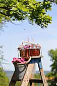 Sommerliches Getränk in Schraubgläsern auf einer Leiter