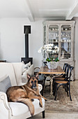 Alsation dog on white armchair in front of dining table and bistro chairs
