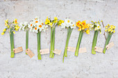 Labelled bunches of different narcissus on concrete surface