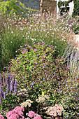 Blühendes Staudenbeet im Herbst mit Fetthenne