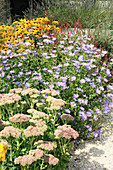 Sedum, asters and rudbeckia in herbaceous border