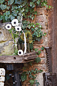Anemones and ivy berries on old workbench against house façade