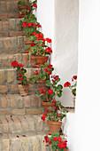 Potted geraniums on old brick steps