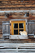 Wooden house with open shutters and cat on window sill